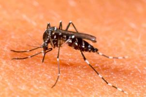 Dengue-2-600x400